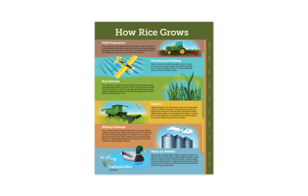 crc-how-rice-grows-poster-client-story