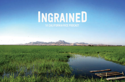 Ingrained – California Rice Commission Launches a Podcast with Our Help