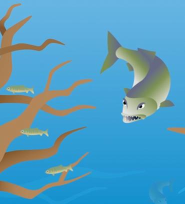 salmonoid_rearing_video
